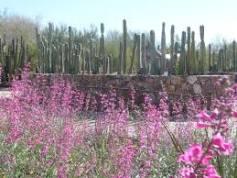 Tohono Chul Park & Flowers