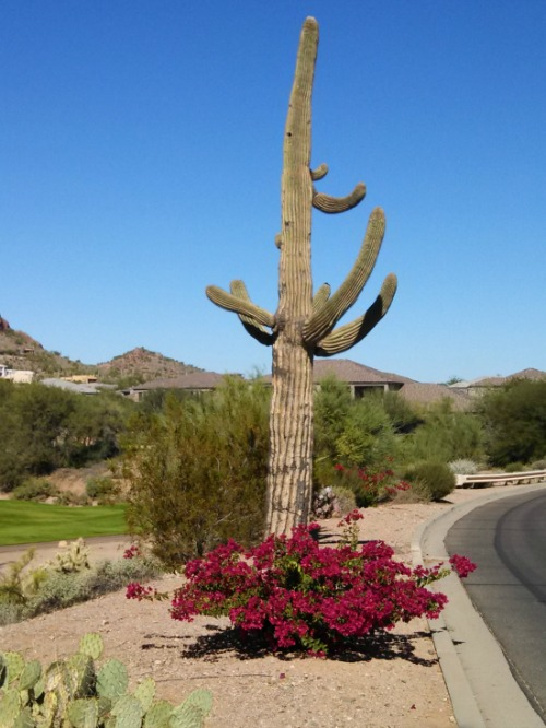 Arizona Vacation Packages