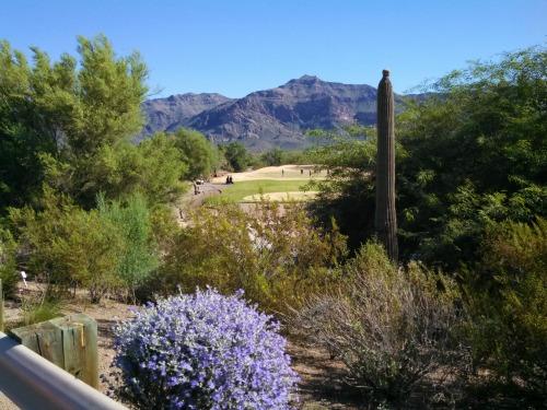 Golfing in Arizona