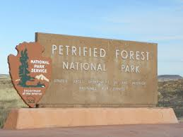 The Petrified National Forest